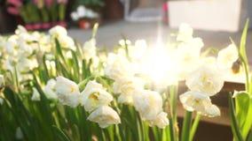Весна цветет утро сток-видео
