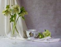 Весна цветет чашка и поддонник Стоковые Изображения