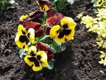 Весна цветка естественная Стоковые Изображения
