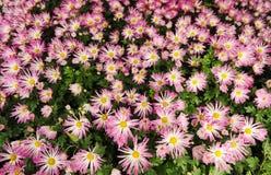 весна цветка кровати Стоковое Изображение RF