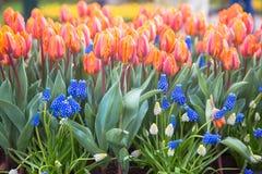 весна цветка предпосылки цветастая стоковая фотография