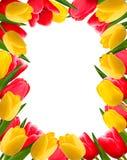 весна цветка предпосылки цветастая Стоковые Фотографии RF