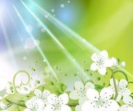 весна цветка предпосылки Стоковое Изображение RF