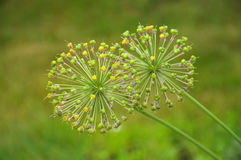 весна цветка сферически Стоковые Фотографии RF