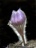 весна цветка Стоковое Фото
