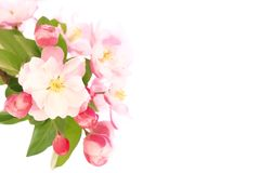 весна цветка Стоковая Фотография