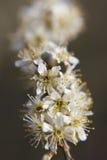 весна цветка dof конца цветения азалии отмелая вверх Стоковые Фото