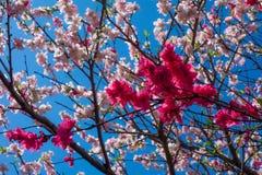 весна цветка dof конца цветения азалии отмелая вверх Стоковое фото RF
