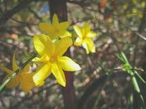 весна цветка dof конца цветения азалии отмелая вверх стоковое изображение