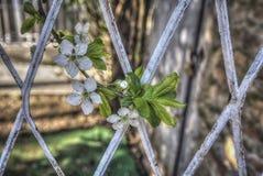 весна цветка dof конца цветения азалии отмелая вверх Стоковое Фото