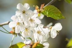 весна цветка dof конца цветения азалии отмелая вверх Стоковая Фотография RF