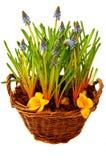 весна цветков корзины стоковое фото rf