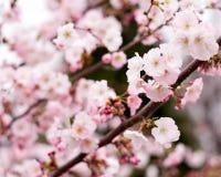 весна цветков стоковое изображение