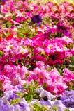 весна цветков Стоковое фото RF