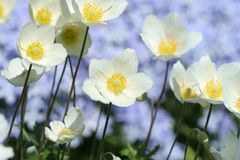 весна цветков стоковые изображения