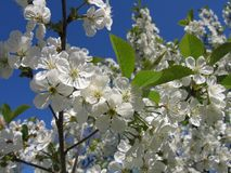 весна цветков Стоковая Фотография