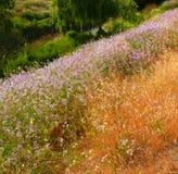 весна цветов последняя Стоковое Изображение RF