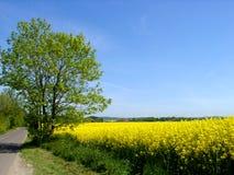 весна цветов Стоковая Фотография RF