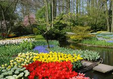 весна цветов Стоковое Изображение