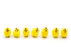 весна цыплят Стоковые Изображения RF