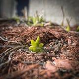 весна человека рук цветений воздуха Стоковые Изображения RF