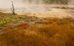 весна черного опала Стоковые Фотографии RF