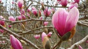 весна человека рук цветений воздуха стоковые изображения