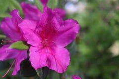 весна человека рук цветений воздуха стоковые фотографии rf