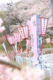 Весна Японии Стоковое фото RF