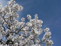 весна Стоковая Фотография