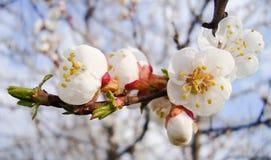 весна Стоковые Изображения RF