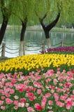 весна 2 парков Стоковые Фото