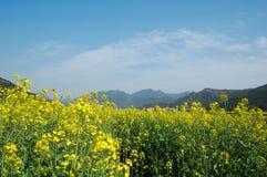 весна 2 полей Стоковое Изображение