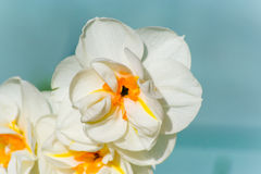 весна 3 цветков Стоковая Фотография