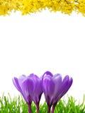 весна 3 цветов граници Стоковые Изображения RF