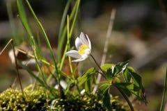 весна 3 Стоковые Изображения RF