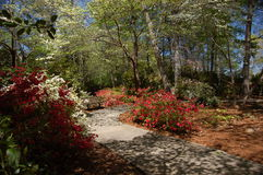 весна 4 цветов Стоковое фото RF