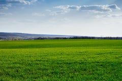Весна Стоковая Фотография RF