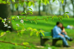 весна Стоковые Фотографии RF