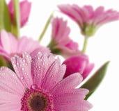 весна 8 садов стоковое фото
