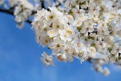 Весна Стоковое Изображение RF