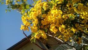Весна Стоковое фото RF