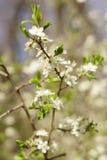 Весна Стоковые Фото