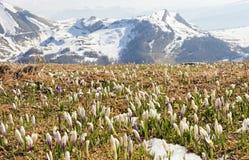 весна alps Стоковое фото RF