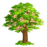 Весна Blossoming 3 Стоковое фото RF