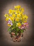 весна daffodils расположения Стоковое Изображение