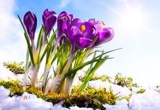 весна florwer предпосылки искусства Стоковое Фото