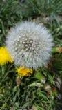 Весна Fuzzies Стоковое фото RF