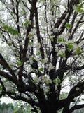 Весна Georgia Стоковое Изображение