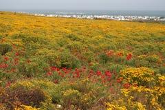весна jacobs залива Стоковая Фотография RF